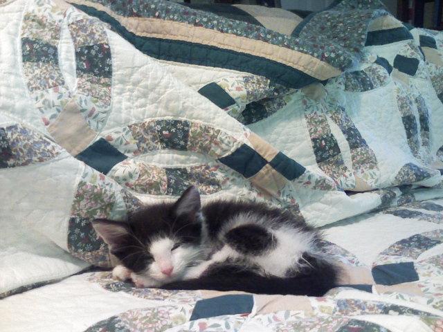 Atticus baby