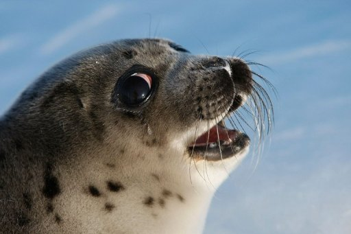 seal talks